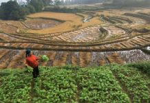 Власти Китая приняли закон о развитии сельского хозяйства