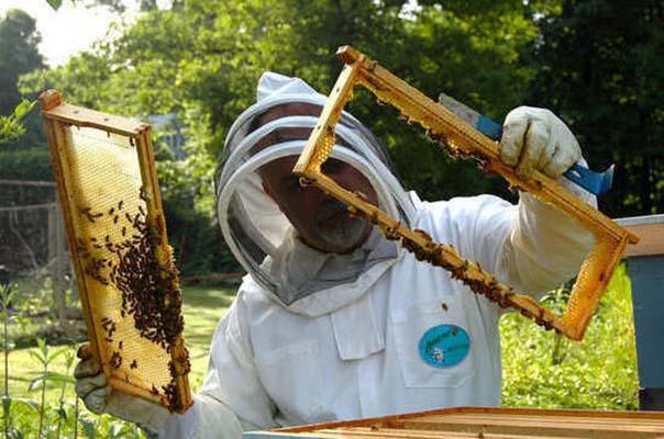 Закон о пчеловодстве защитит пчёл и повысит качество мёда