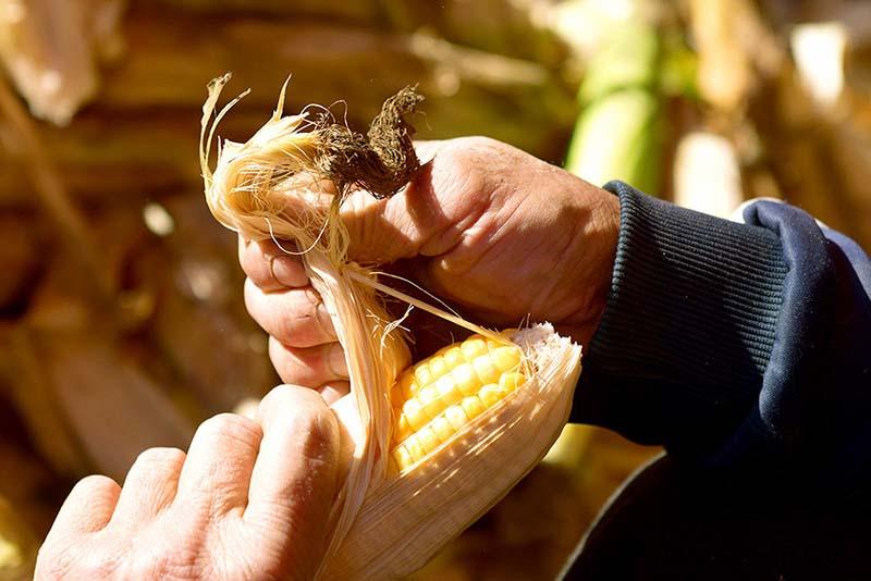 Photo of Аграрии застраховали втрое больше посевов