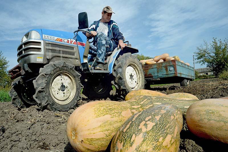 Photo of Аграриям разрешат год не платить по льготным кредитам