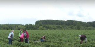Цифровизация облегчит жизнь аграриев