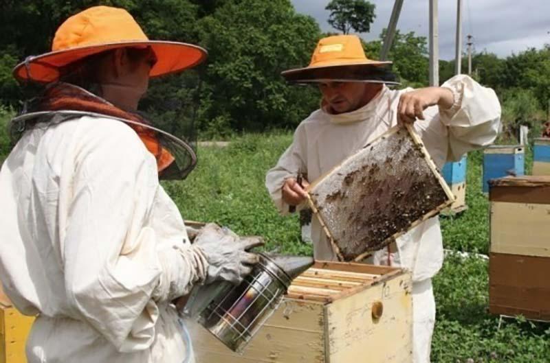 Комитет Госдумы поддержал проект закона о пчеловодстве