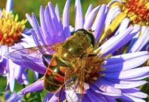 Комитет Совета Федерации поддержал концепцию законопроекта «О пчеловодстве в РФ»