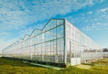 Льготное кредитование для тепличных комплексов планируют увеличить до 12 лет