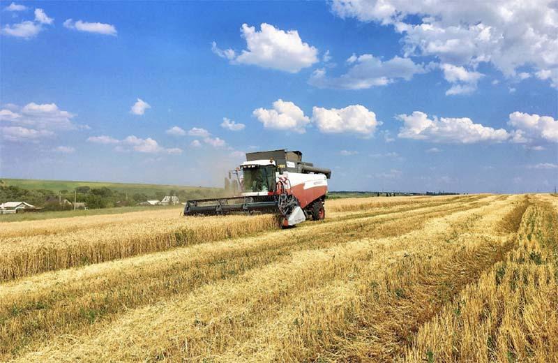 Новый урожай зерновых пока отстает от прошлогодних показателей