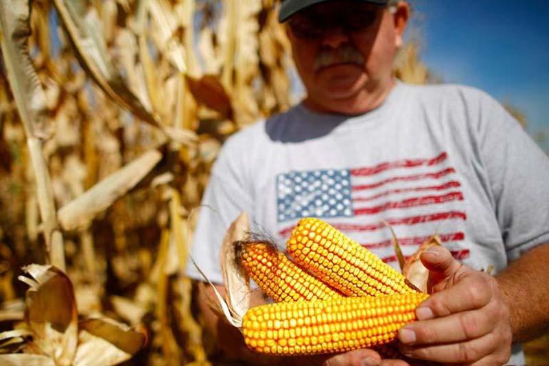Земледелие Северной Америки: климатические пояса и основные культуры