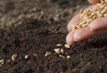 Российские аграрии переходят на отечественные семена