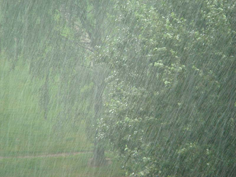 Сельское хозяйство Японии серьезно пострадало от мощных ливней