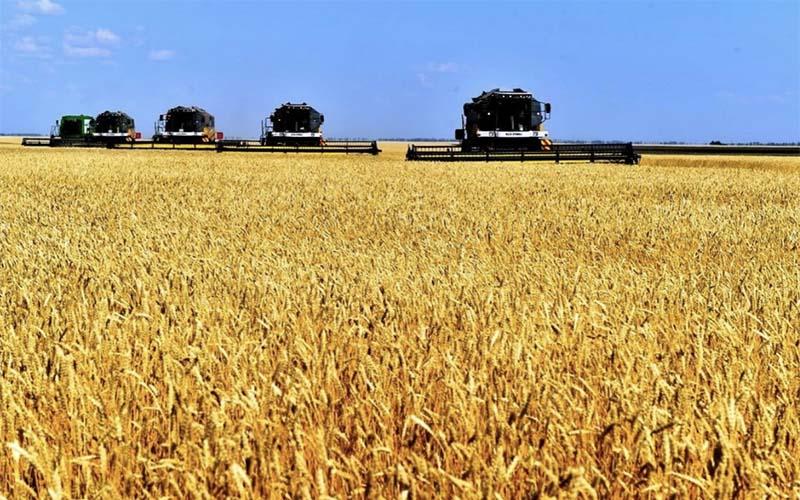 Уточненные данные по урожаю пшеницы 2020
