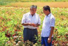 Узбекистан получит кредит в $500млн на модернизацию сельского хозяйства
