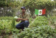 В Мексике отчитались о достижениях в сельском хозяйстве