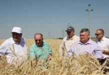 В Оренбургской области нашли новый способ повышения урожайности озимых