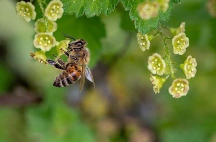 В Ростовской области массово гибнут пчёлы