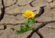 Засуха 23 района Алтайского края подтвердили гибель посевов