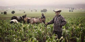 Земледелие Северной Америки климатические пояса и основные культуры