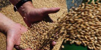 Бизнес на селе приносит и трудности, и удовольствие, считает фермер Василий Соловий