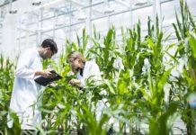Научные исследования в АПК будут субсидироваться из госбюджета