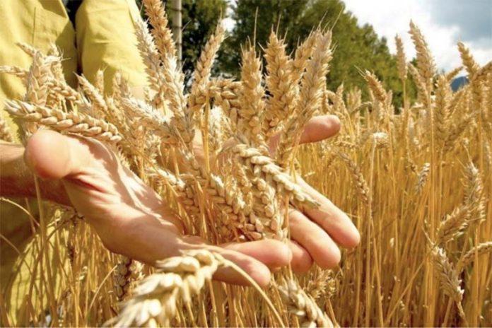 Россия уронила цены на европейское зерно