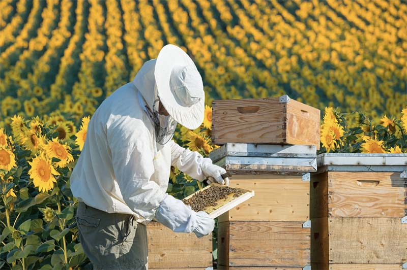 Photo of Российские пчеловоды могут получить льготные экономические режимы