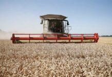 Согласно рейтингу российских регионов по эффективности в аграрной сфере, Краснодарский край стал лучшим.