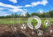 Сопутствующий бизнес и другие виды деятельности в фермерских хозяйствах