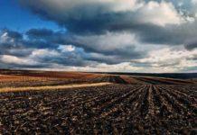 Сотни тысяч гектаров пашни в центральных и северо-западных районах Оренбургской области пришли в негодность 1