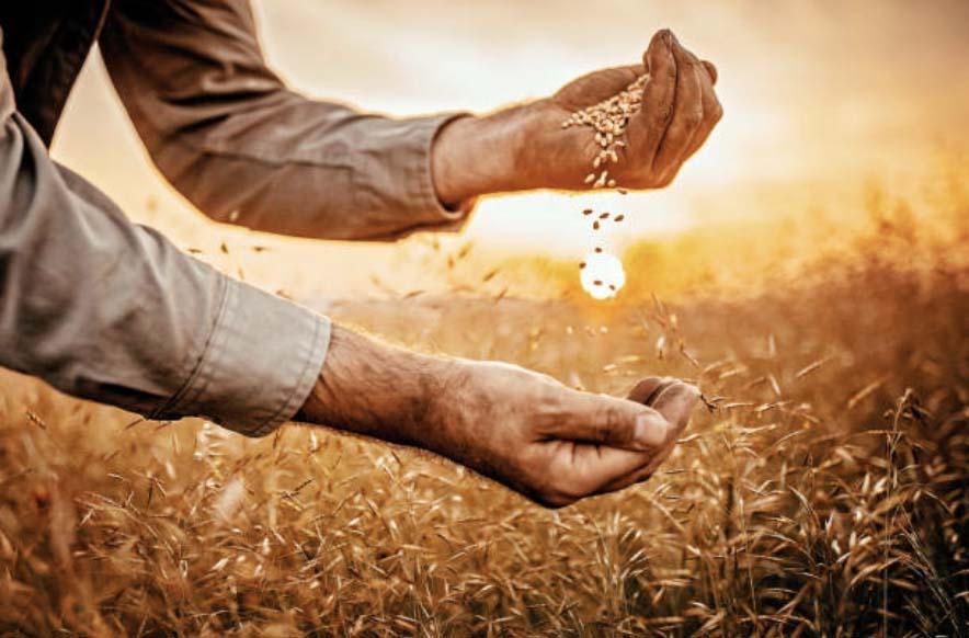 Урожай пшеницы в Центре России и Поволжье компенсировал потери от засухи в других регионах страны