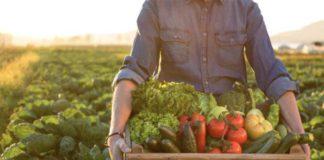Виды фермерских хозяйств – каким бизнесом оно может заниматься