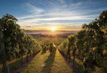 Винодельня в фермерском хозяйстве как бизнес