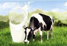 Власти Якутии планируют повысить закупочную цену молока для сельхозпроизводителей