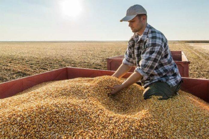 Зачем перекупщики ринулись в сельское хозяйство?