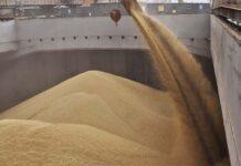 Безвозмездно: Россия повезла зерно в Северную Корею