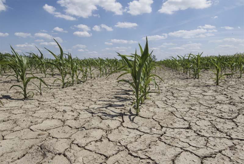 Ежегодно 12 млн гектаров земли становятся непригодны для ведения сельскохозяйственной деятельности по причине деградации почв