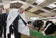 Холдинг Лукашенко является лидером среди крупнейших производителей молока Беларуси и России