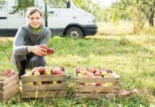 Как получить грант на развитие сельского бизнеса