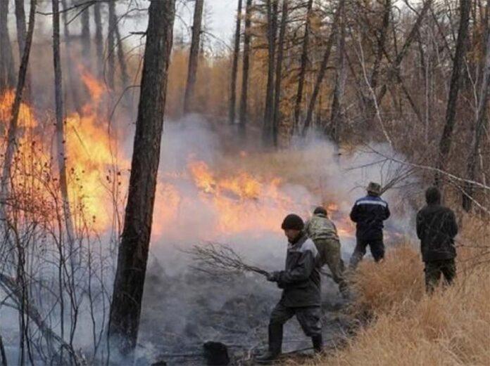 Лесные пожары в Якутии уничтожили более 1,4 тыс. тонн заготовленного сена