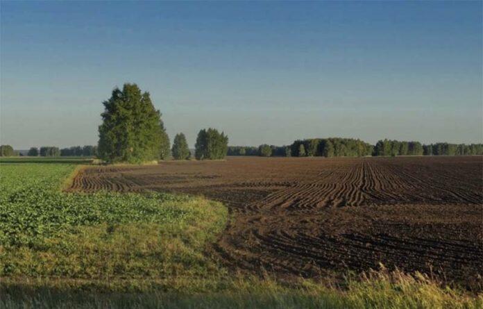 Миллионы гектаров новых земель планируют ввести в оборот в России