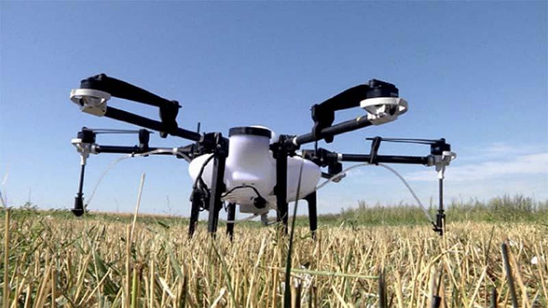 На полях Самарской области используют дроны для борьбы с сорняками