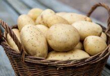 Осенью ожидается подорожание картофеля