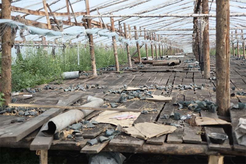 Овощной рынок Урала выдержал отсутствие китайских теплиц
