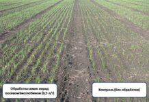 Применение Биоглобина в растениеводстве
