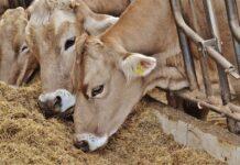 Реестр базовых хозяйств агропромышленного комплекса планируют создать в Иркутской области