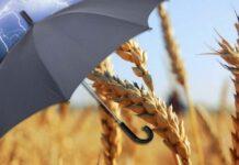 Татарстанские фермеры могут бесплатно воспользоваться услугами агрострахования
