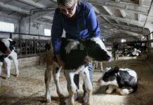 В Бурятии запустили первые в регионе краткосрочные курсы для фермеров