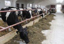 В Приморье открылась высокотехнологичная семейная ферма