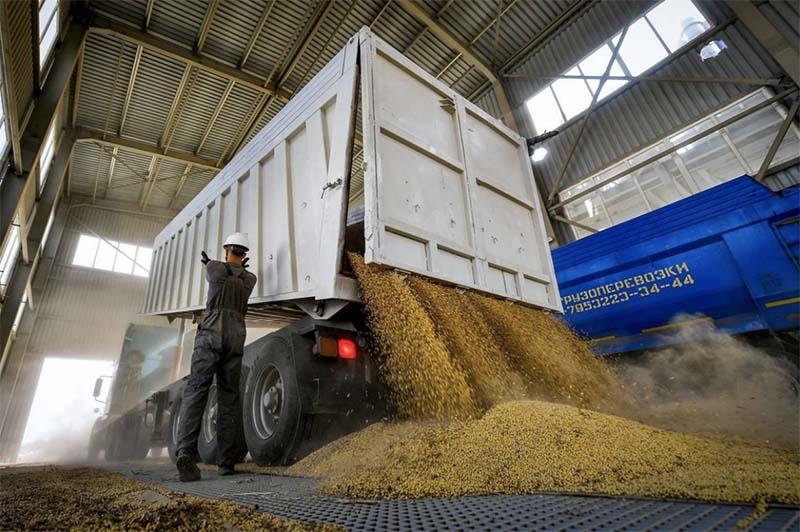 В России хотят создать систему контроля качества и прослеживаемости зерна