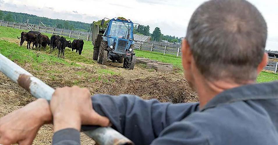 В Татарстане 30 фермеров вернули грантовую поддержку в бюджет из-за нарушений