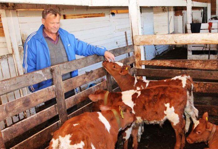 Выгодно ли заниматься фермерством