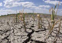 Животноводы Бурятии страдают от засухи и наводнений