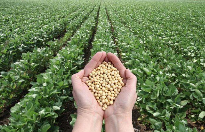 Это важно знать! Сведения для участников зернового рынка